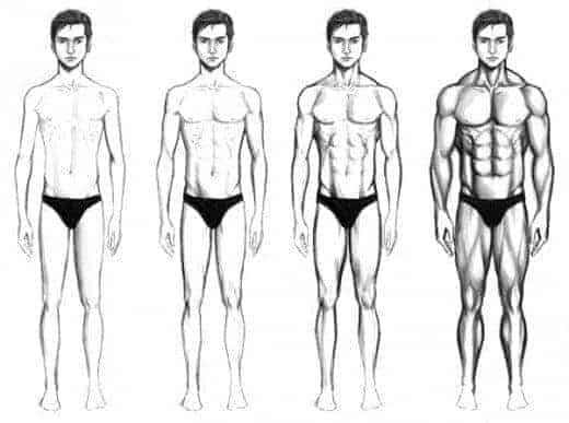 Photo of 3 Powerful Tips On How To Build Muscle For Ectomorphs Body Type