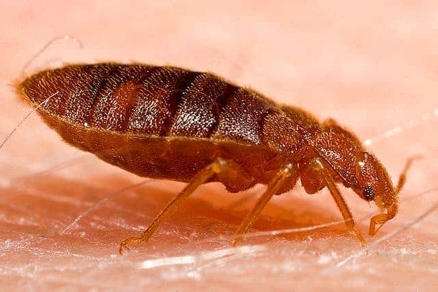 Photo of Bed Bugs 101 – How to Get Rid of Bed Bugs
